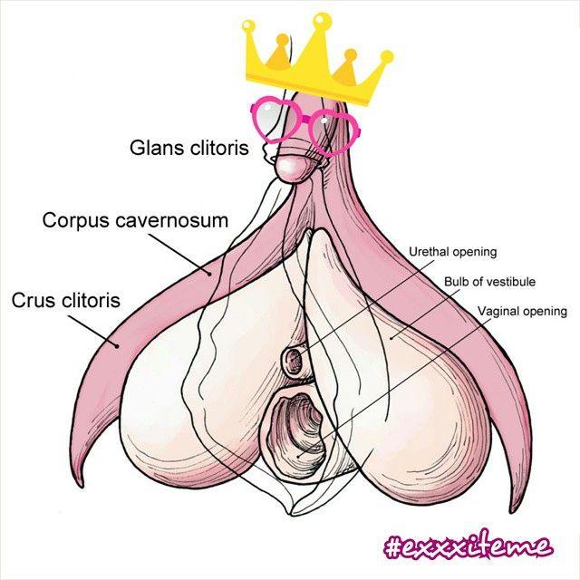 Sexual Erotic Hints Clitoris
