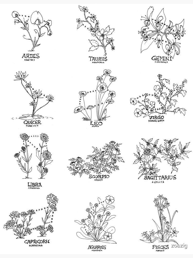 Póster 'Constelación Floral - Conjunto' de zoazig