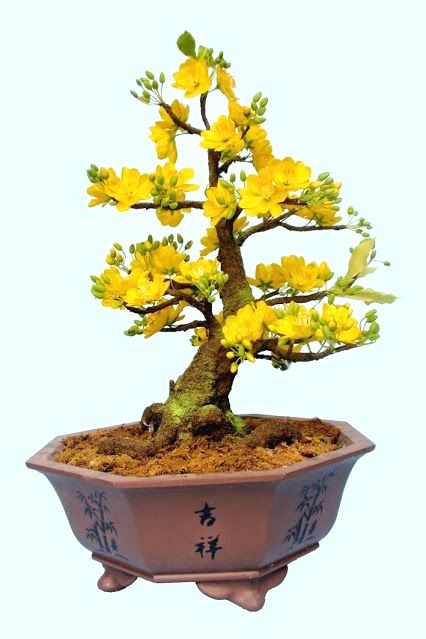 ♦●What do you think about this cute #bonsai tree?♦☼       #BonsaiInspiration