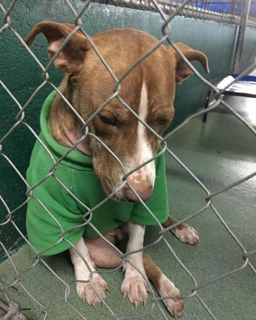 Please Remember Shelter Dog Still Wearing His Christmas Sweater Shelter Dogs Dogs Animals