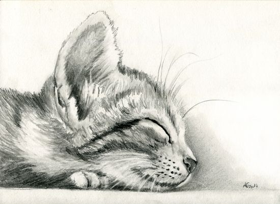 Coloring Pages Of Sleeping Animals : Pin by phoenixia on drawings pinterest drawings animal drawings