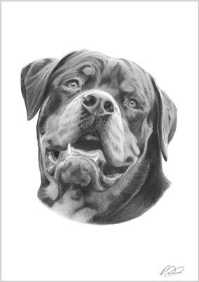 Rottweiler Rotty Rottie Pencil Drawing Print Art Present For Dog