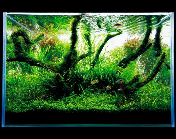 ADA Nature Aquarium Aquascape | The Green Machine | Nature ...