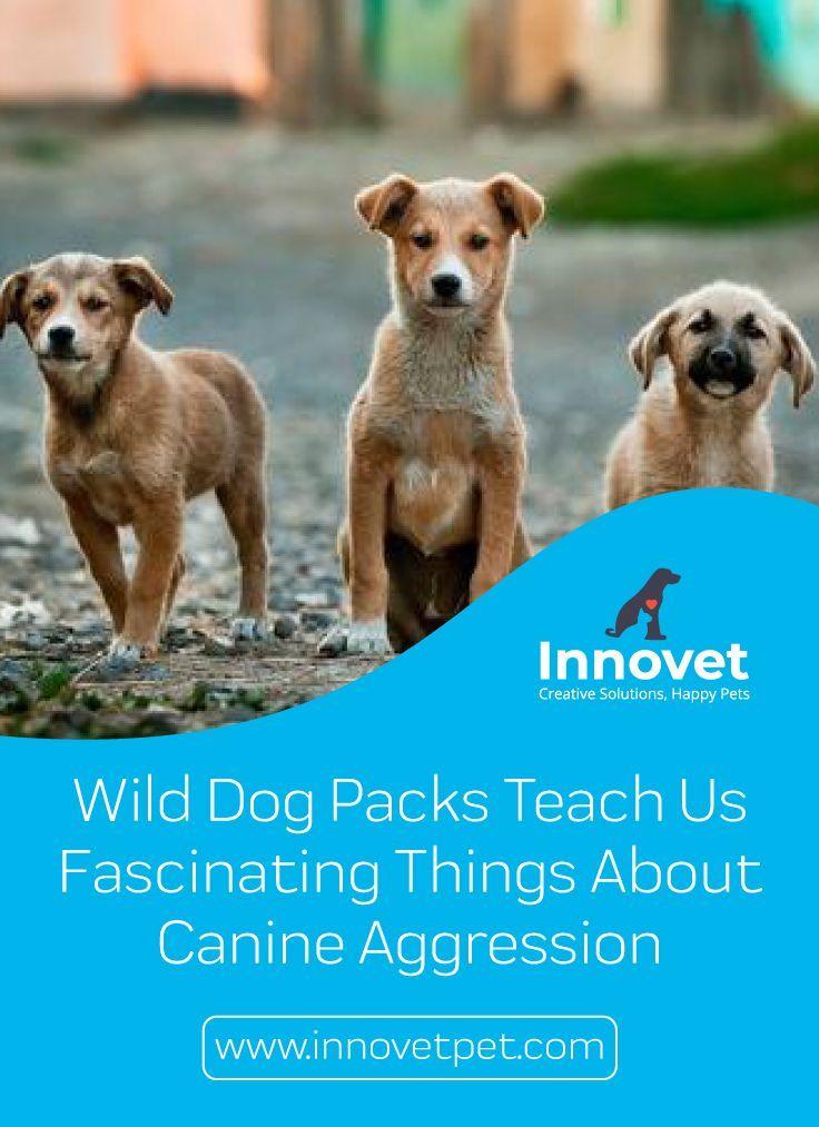 17++ Large animal vet salary ideas