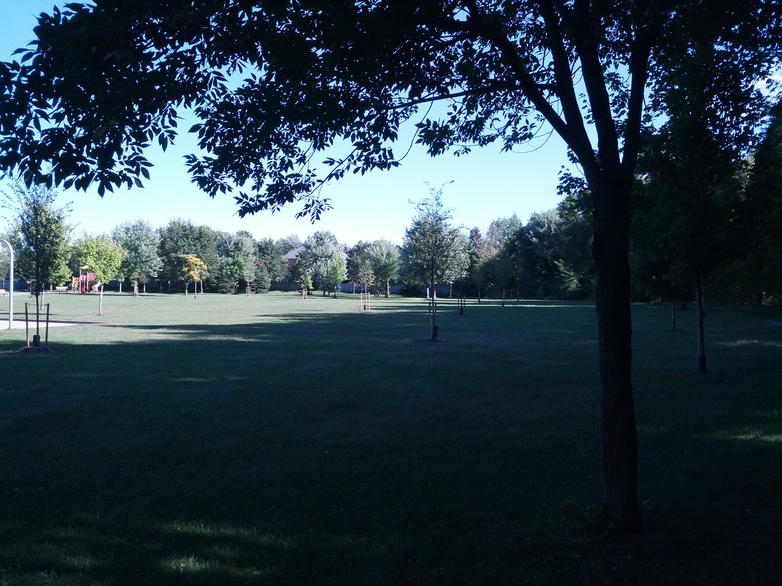 Late Afternoon, September, Carriage Hill Park, London, Ontario.