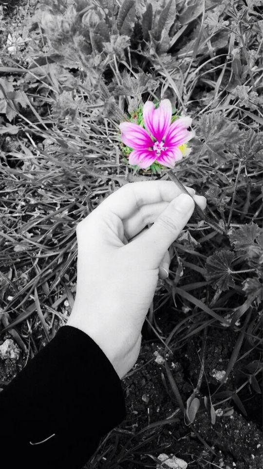 #purpleflower