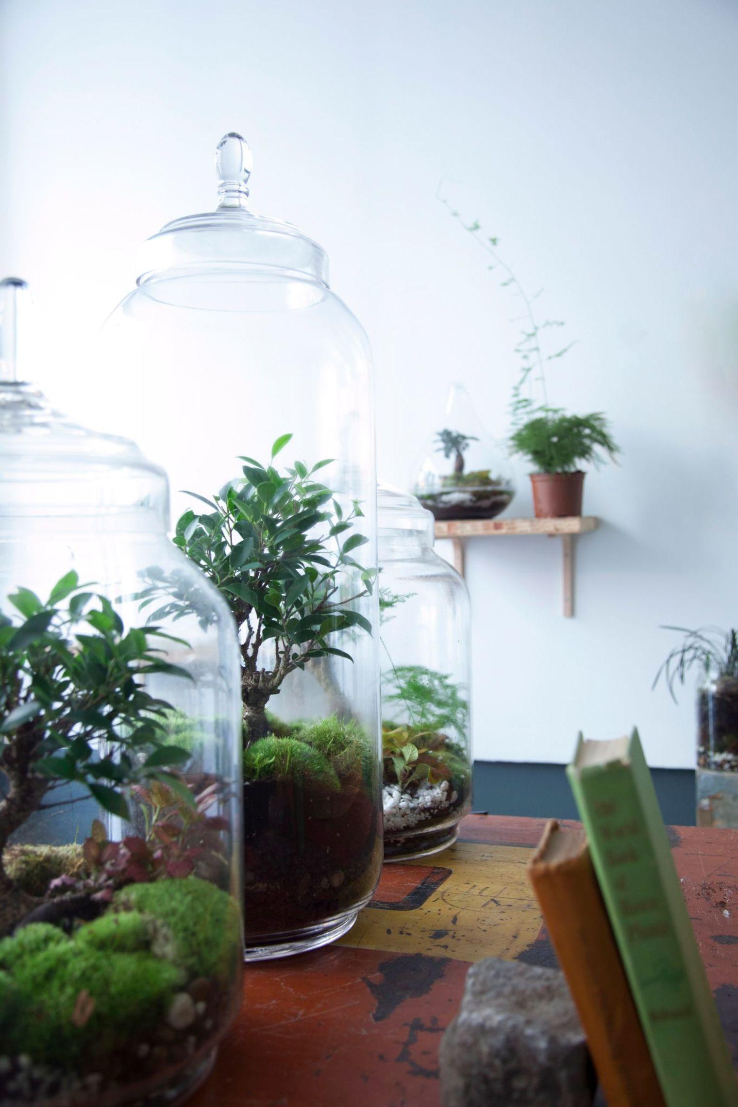 Deco Nature La Tendance Des Plantes D Interieur Jardin De