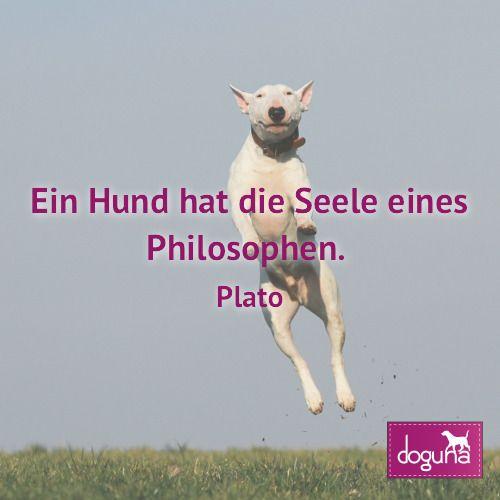 Ein Hund Hat Die Seele Eines Philosophen Plato Hund Hunde