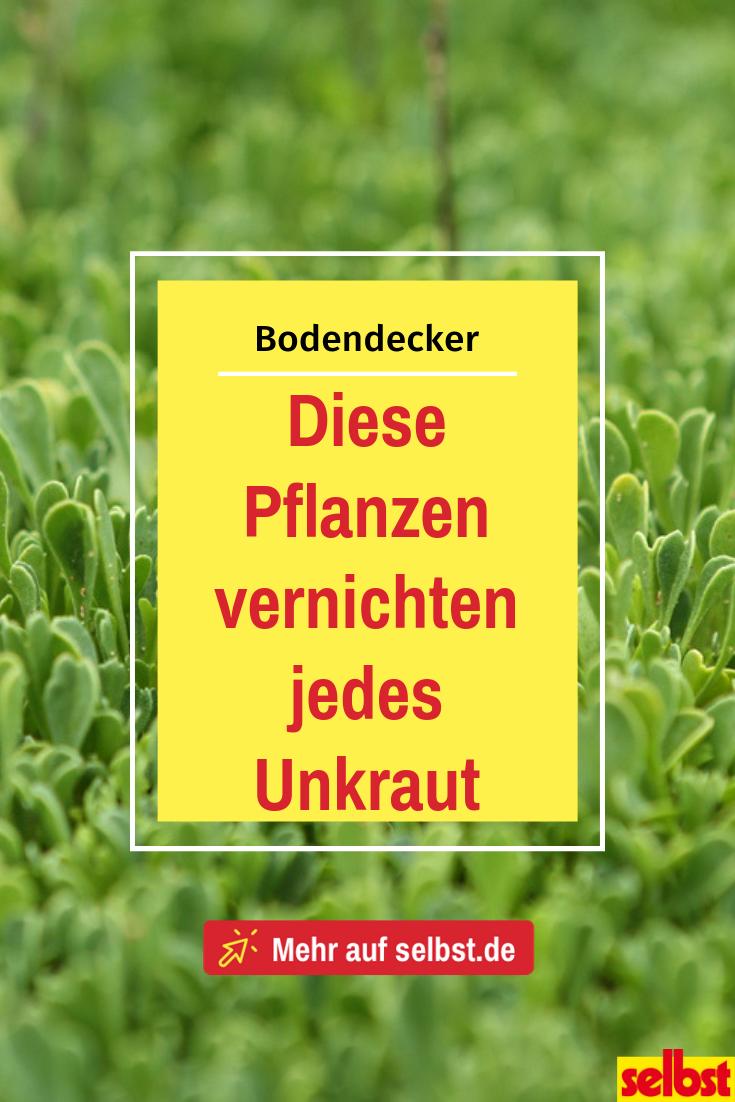Bodendecker | selbst.de
