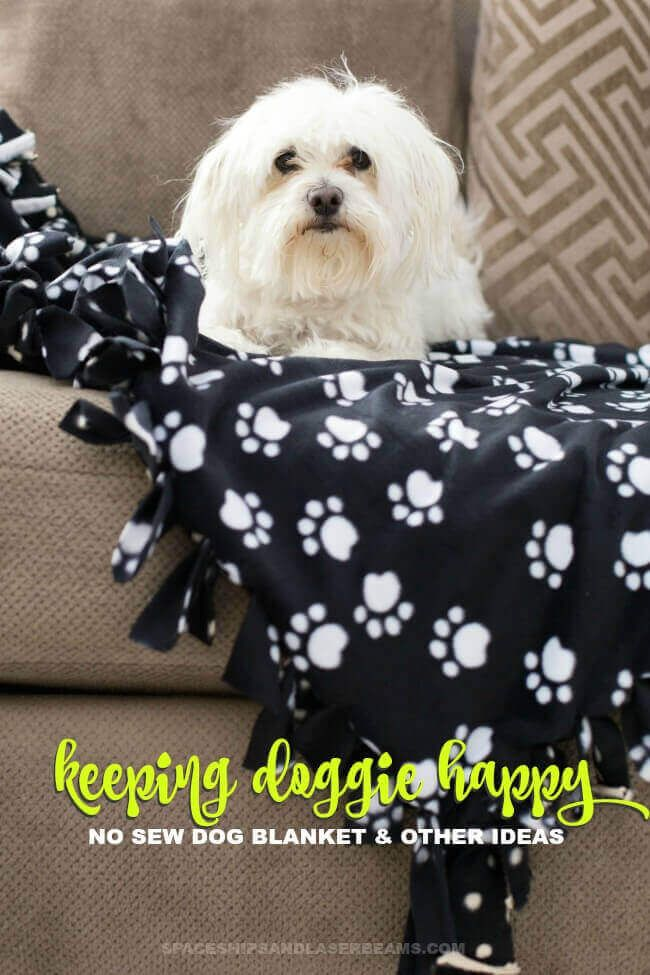 No Sew Dog Blanket By Spaceships And Laserbeams Homemade Dog