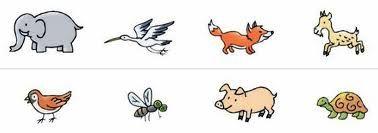 Animales Viviparos Y Oviparos Para Colorear Buscar Con Google
