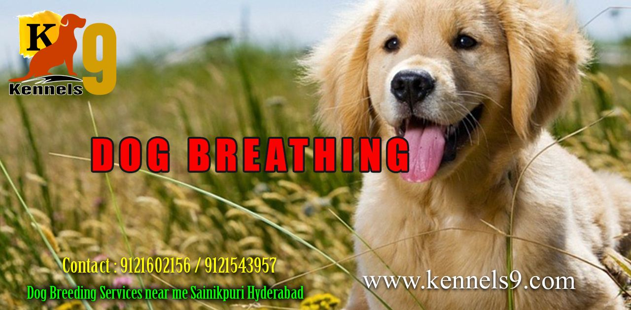 Dog Breathing And Dog Grooming Services At Affordable Prices