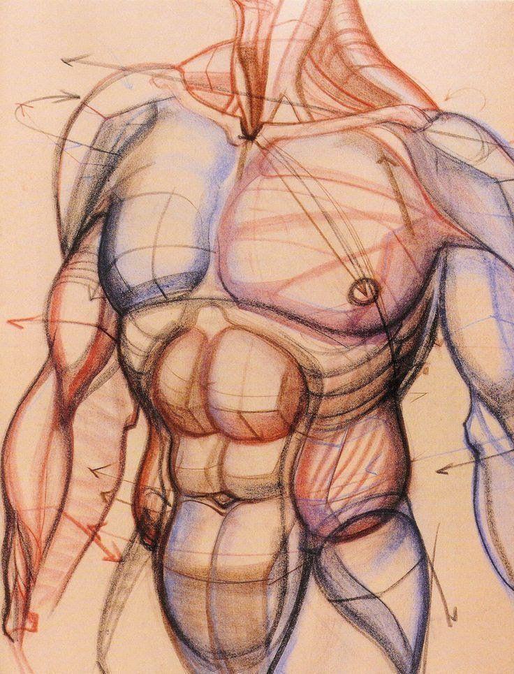 Anatoref Dynamic Anatomy By Burne Hogarth Burne Hogarth