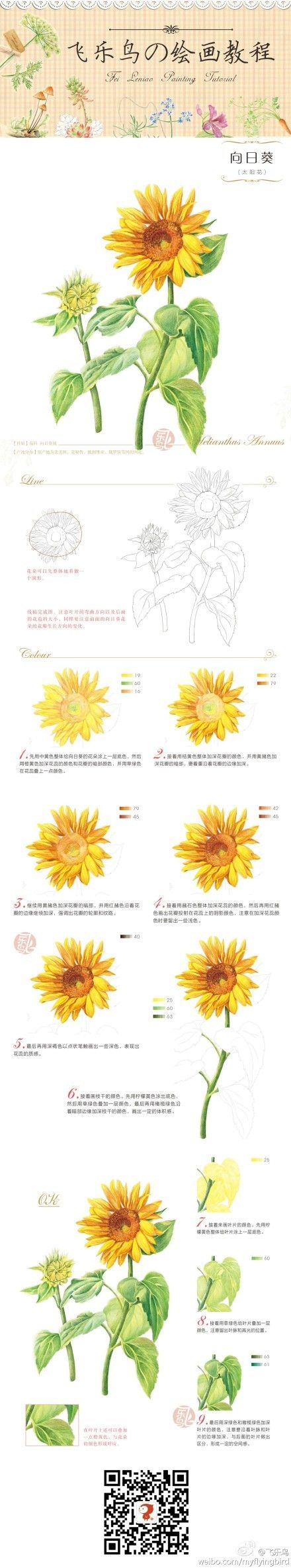 How to draw and paint a sunflower drawing pinterest sunflowers
