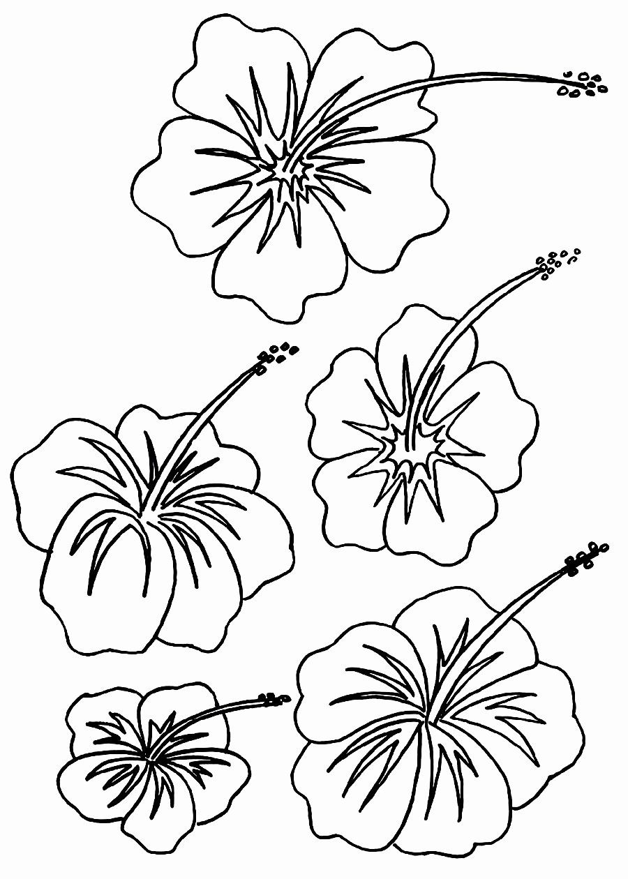 Hawaiian Flower Coloring Page Fresh Free Printable Hibiscus Coloring Pages For Kids Flower Drawing Hawaiian Flower Drawing Flower Coloring Pages