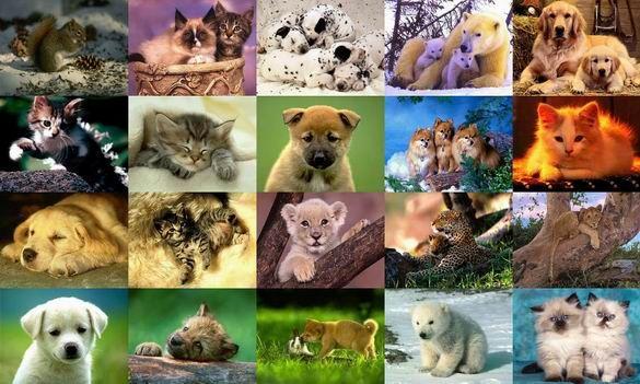 Animal Screensavers Animals Photo Screensaver Volume 3 1 0 Free Download For Windows 8 Baby Animals Cute Animals Animals