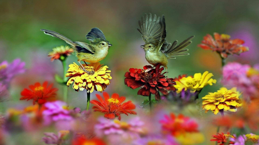 Bird With Flowers Wallpapers Wallpaper Cave in 2020