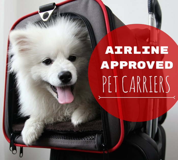 8 Best Airline Approved Pet Carriers (For InCabin Flights