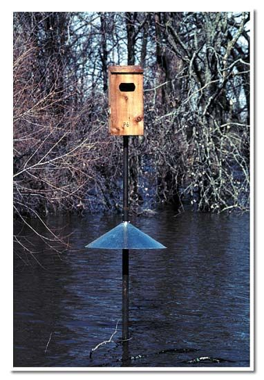Wood duck nest box with predator guard home style pinterest wood duck nest box with predator guard publicscrutiny Choice Image