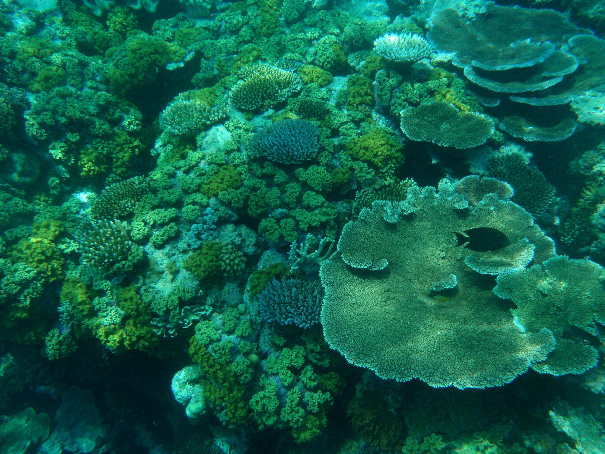 Students Learn About Reef Ecology With A Focus On
