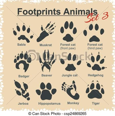 Vector - Footprints Animals - vector set. - stock illustration, royalty free illustrations, stock clip art icon, stock clipart icons, logo, line art, EPS picture, pictures, graphic, graphics, drawing, drawings, vector image, artwork, EPS vector art
