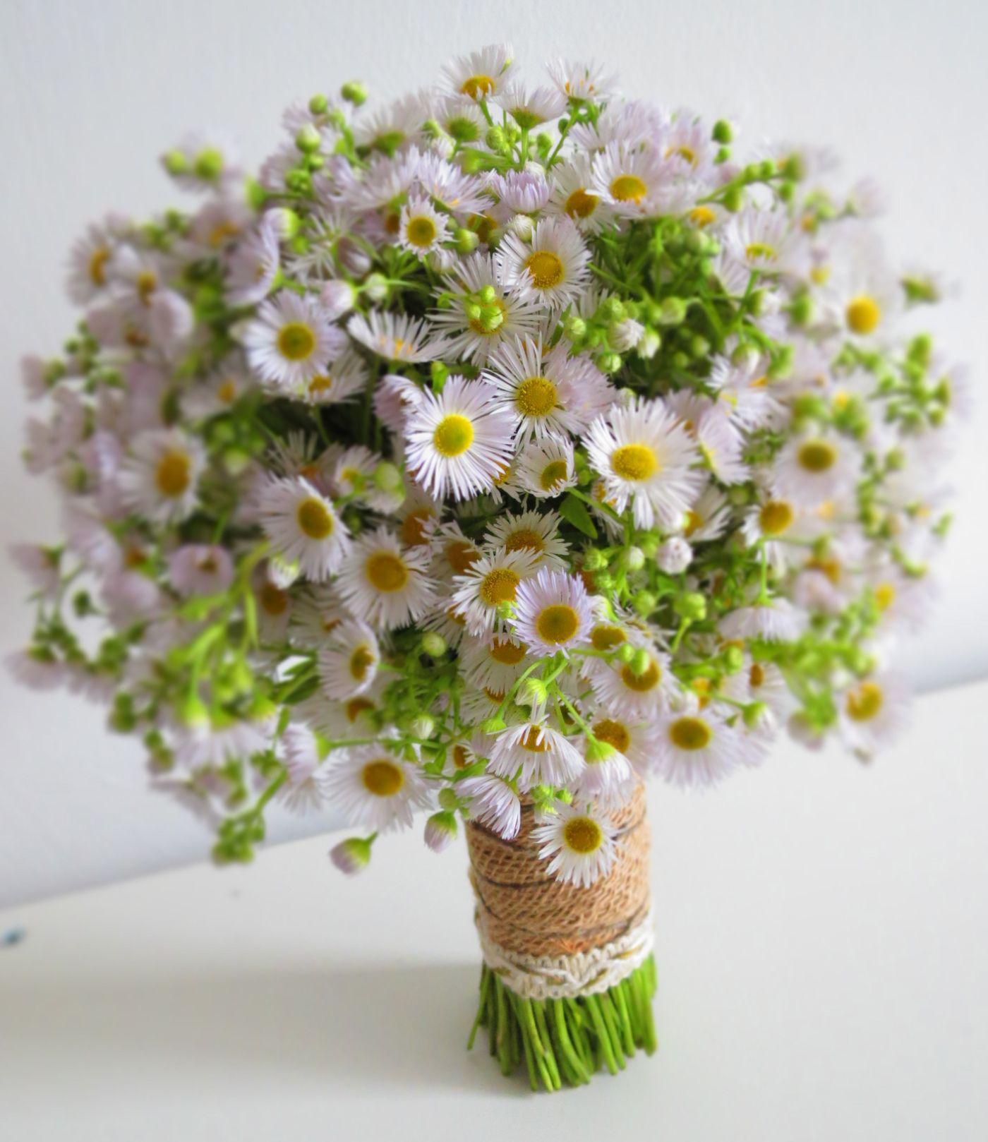Beautiful white aster bouquet september flower Flower