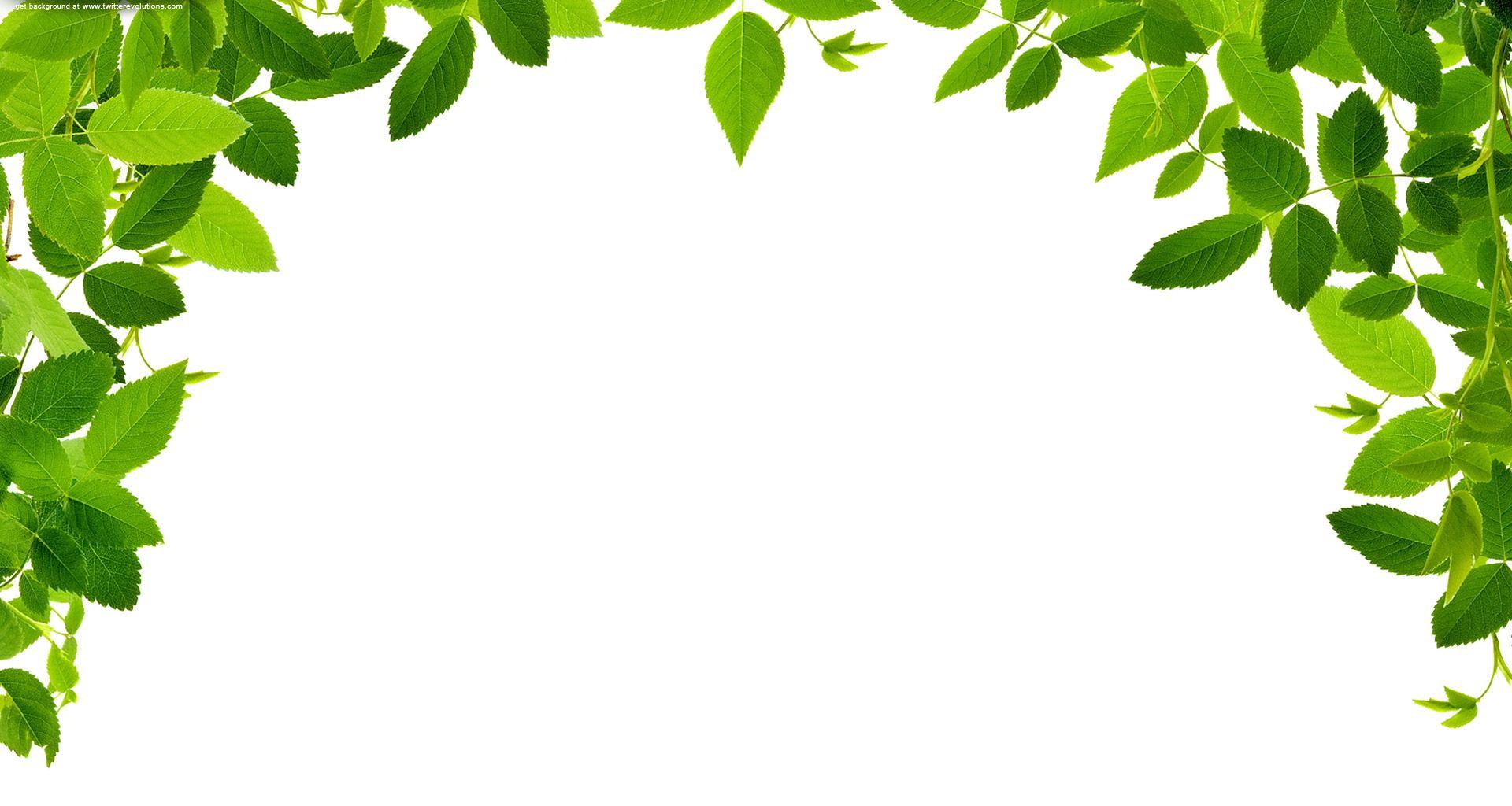Leaves Real Free Images At Clker Com Vector Clip Art Online Cartoon Leaf Leaf Border Clip Art