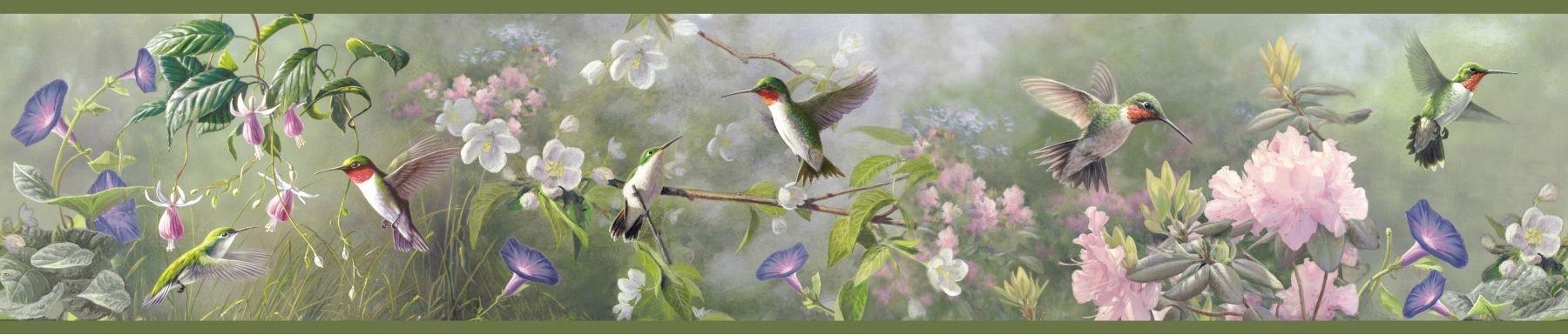 hummingbird wallpaper border 2019 Hummingbird wallpaper