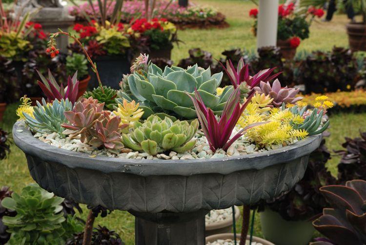 plantes grasses ext rieur conseils d 39 entretien et id es d co plantes plante grasse. Black Bedroom Furniture Sets. Home Design Ideas