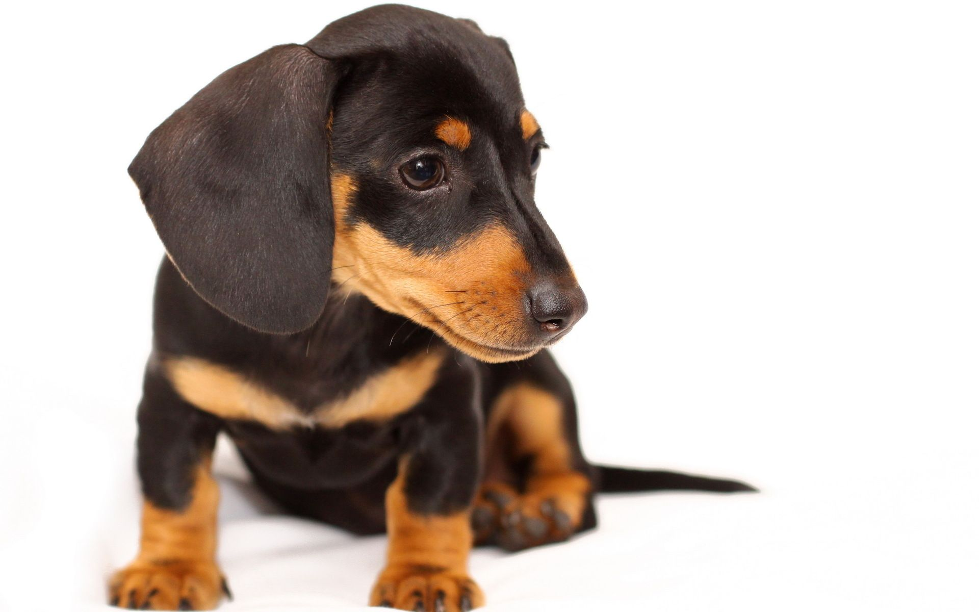 Pin By Christen Trammell On Dachshunds Doxie Puppies Dachshund