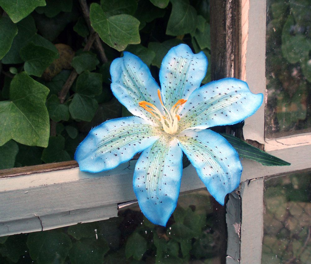 Blue tiger lily blue tiger lily hair clip by panfrieda on etsy the gallery for blue tiger lily flower izmirmasajfo Choice Image