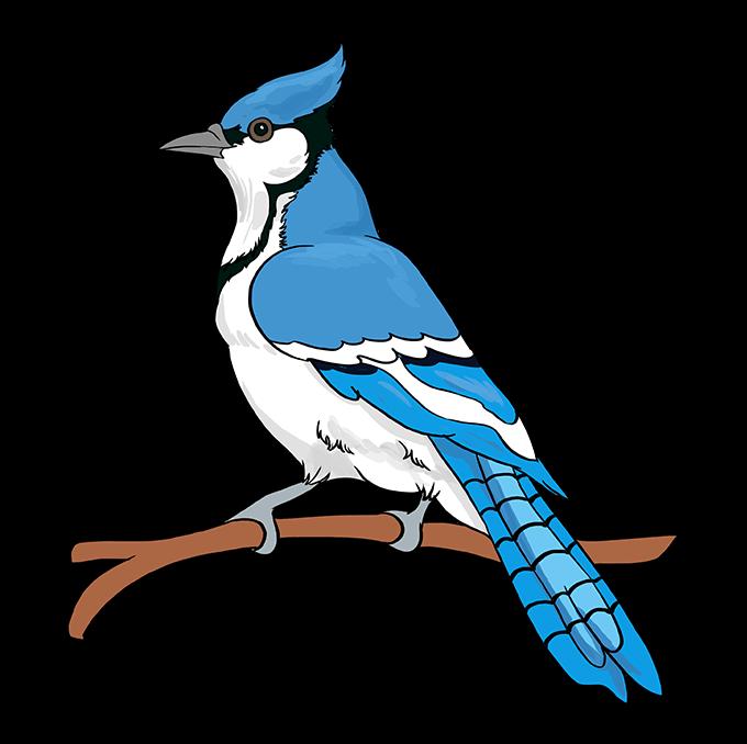 Birds 1 Blue Jay Birds Animals Bird Bluejay Digitalpainting Drawing Nature Drawingdigital Blue Jay Blue Jay Bird Bird Sketch
