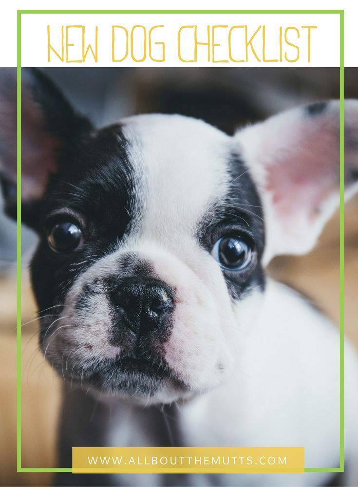 best dog food for french bulldogs australia
