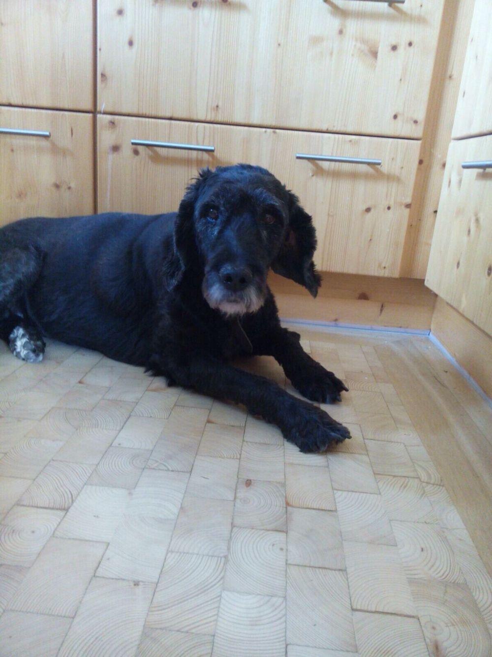My beautiful dog... RIP 20th of November 2015