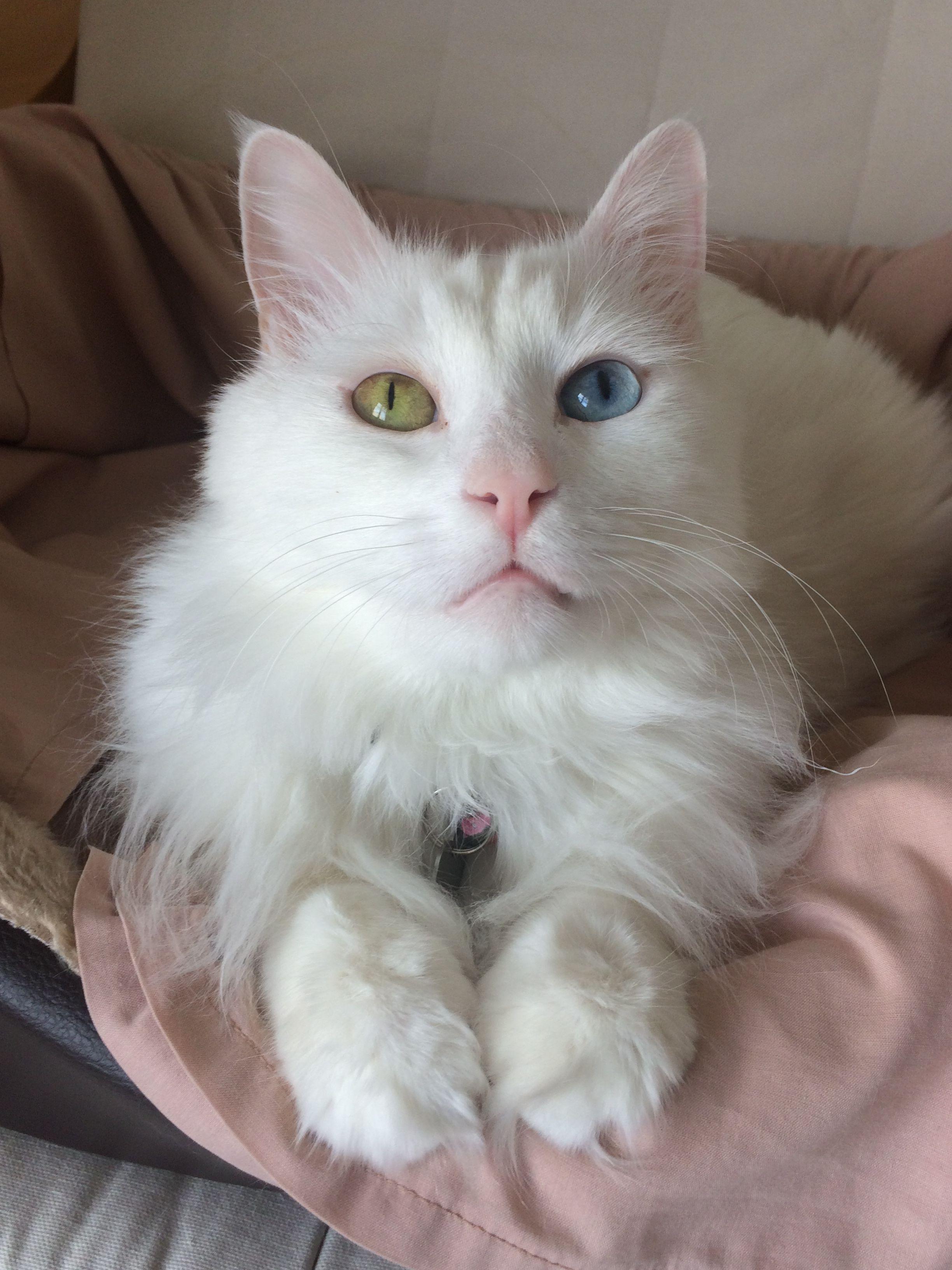 OTUZ DÖRT adlı kullanıcının World of Cats panosundaki Pin