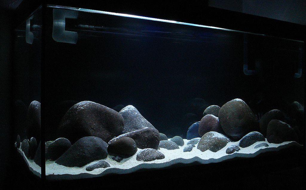 Malawi Tank Setup Ideas Cichlid Aquarium Aquarium Goldfish Aquarium