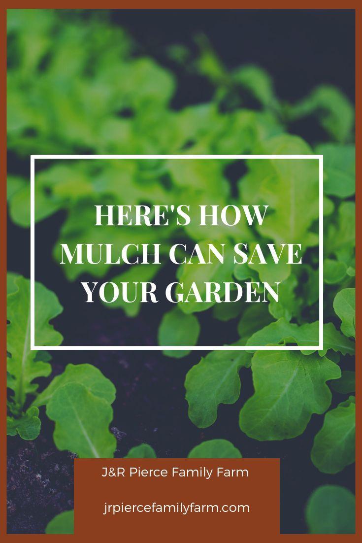 mulch - hero of vegetable