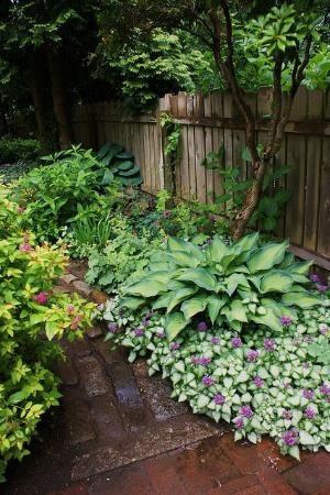 Hosta Ivy And Hydrangea For Shade