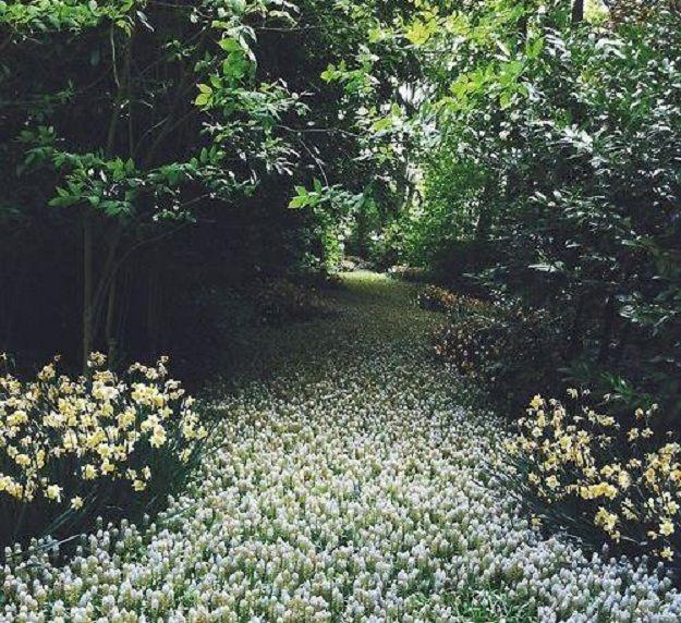 ดอกไม้สีขาวนวลปุูลาดเป็นทางเดินที่สวยงามน่าประทับใจ
