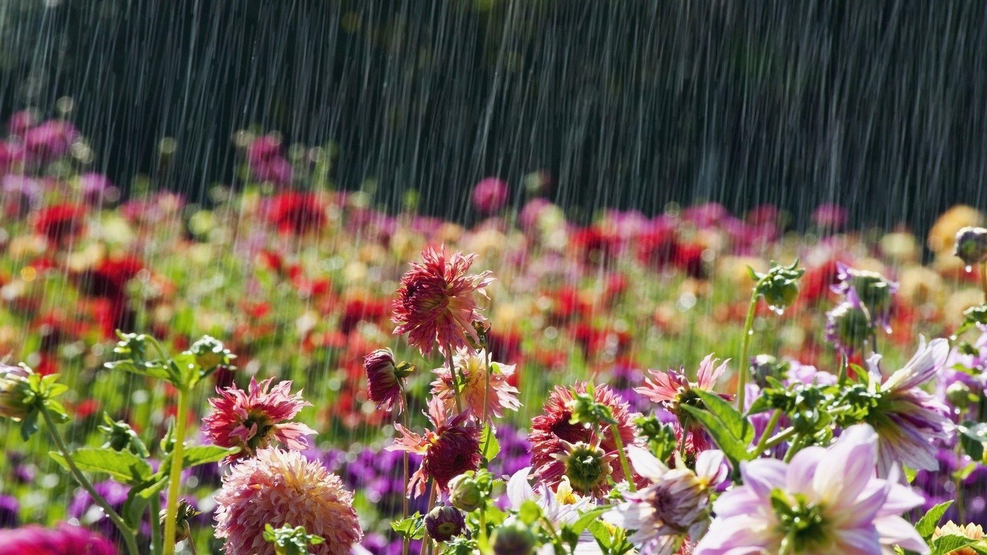 Foto Gratis Flores Fondo Naturaleza: Fotografía Lluvia Flor Naturaleza Fondo De Pantalla