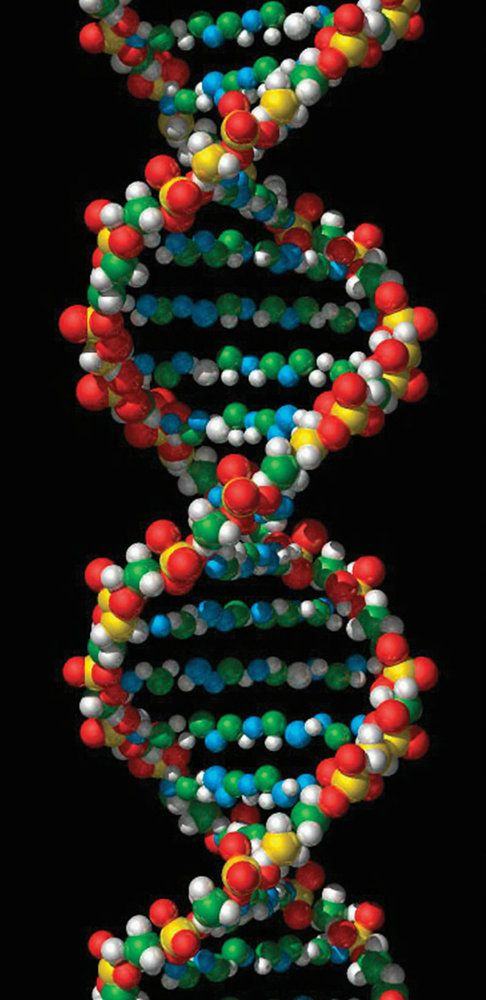 DNA Definition, Structure \ Discovery Chart - new molecular blueprint definition
