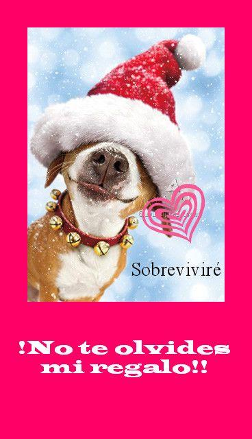 Navidad | Sobreviviré | Navidad y Sobreviví