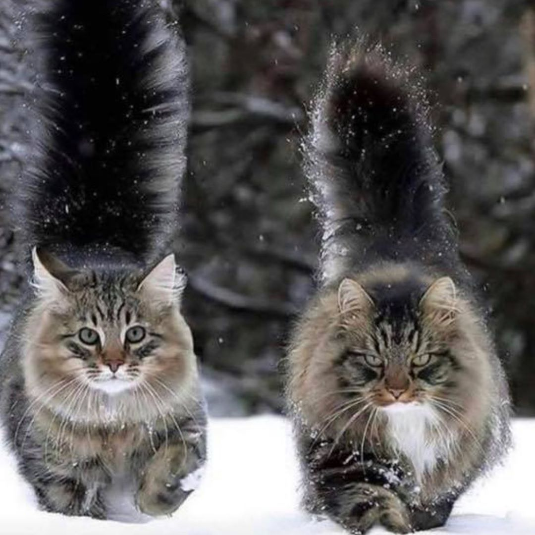 Good morning my friend  #cats #cat #catsofinstagram #of #instagram #catstagram #catlover #pets #instacat #catlovers #meow #kittens #kitten #kitty #love #world #catoftheday #animals #dogs #pet #cute #catlife #adoptdontshop #gatos #gato #lovecats #dog #ilovemycat #animal #bhfyp
