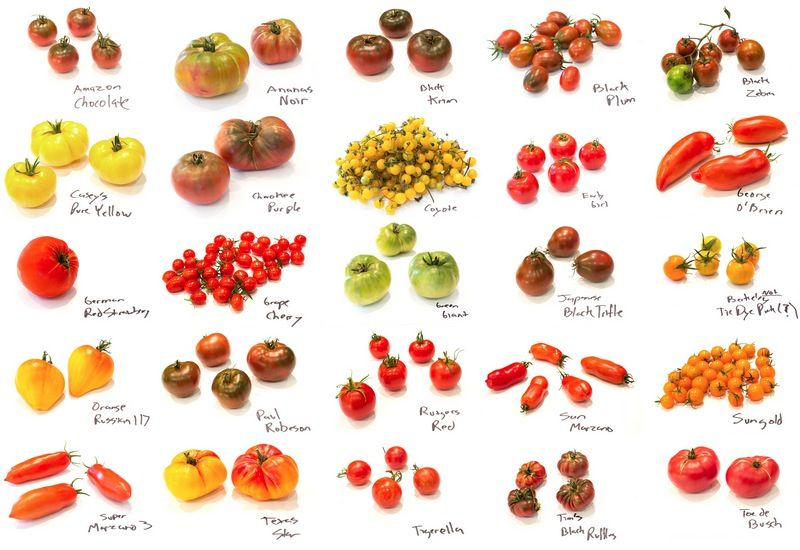 How many varieties of tomatoes
