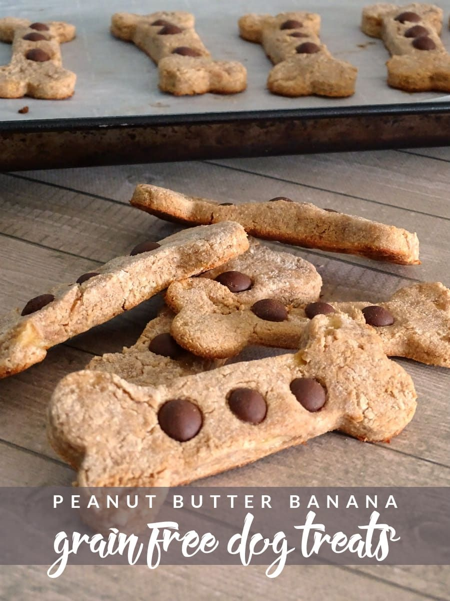 Peanut Butter Banana Grain Free Dog Treats Recipe Dog Biscuit