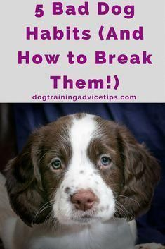 5 Bad Dog Habits And How To Break Them Train That Puppy Dog