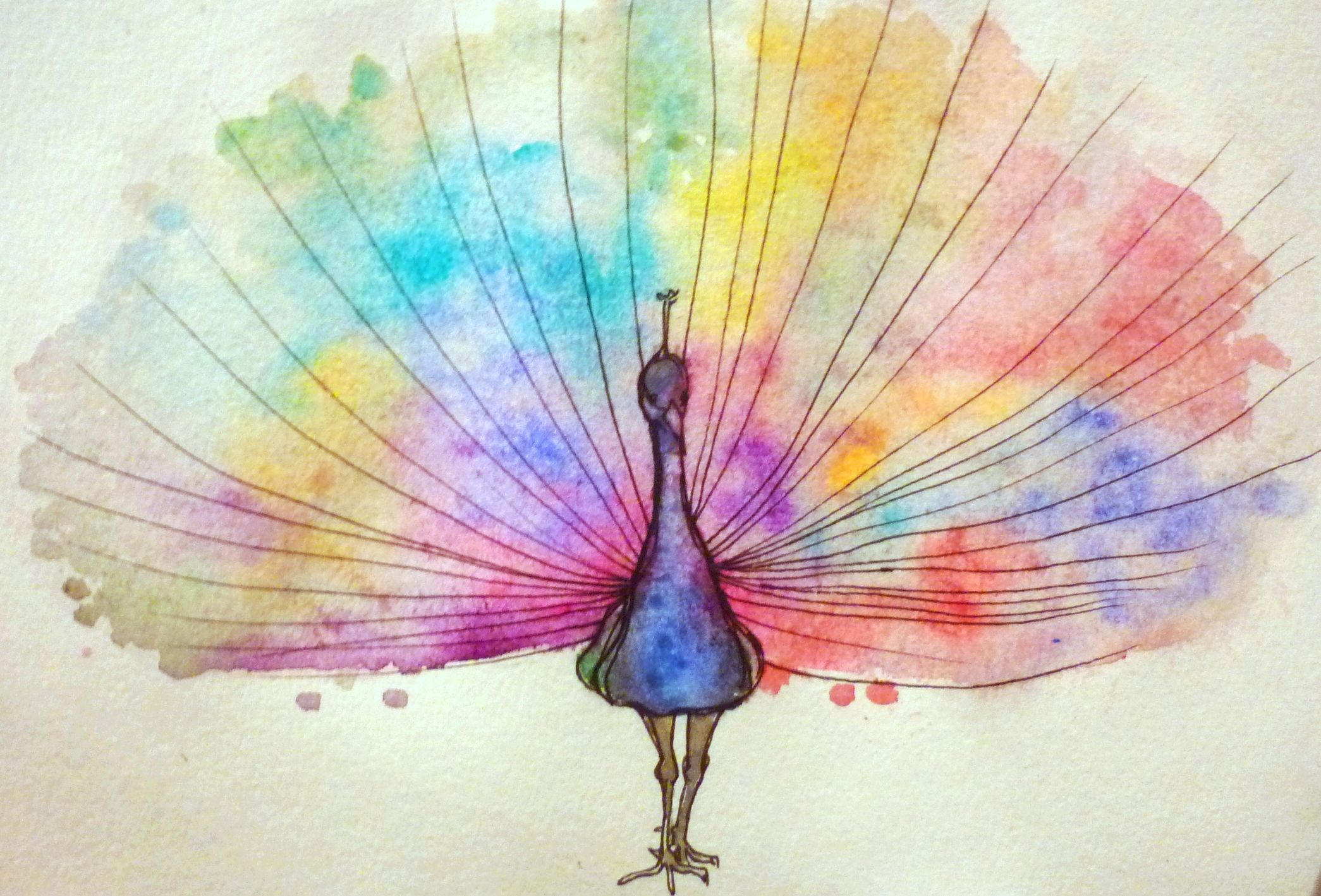 Watercolour peacock
