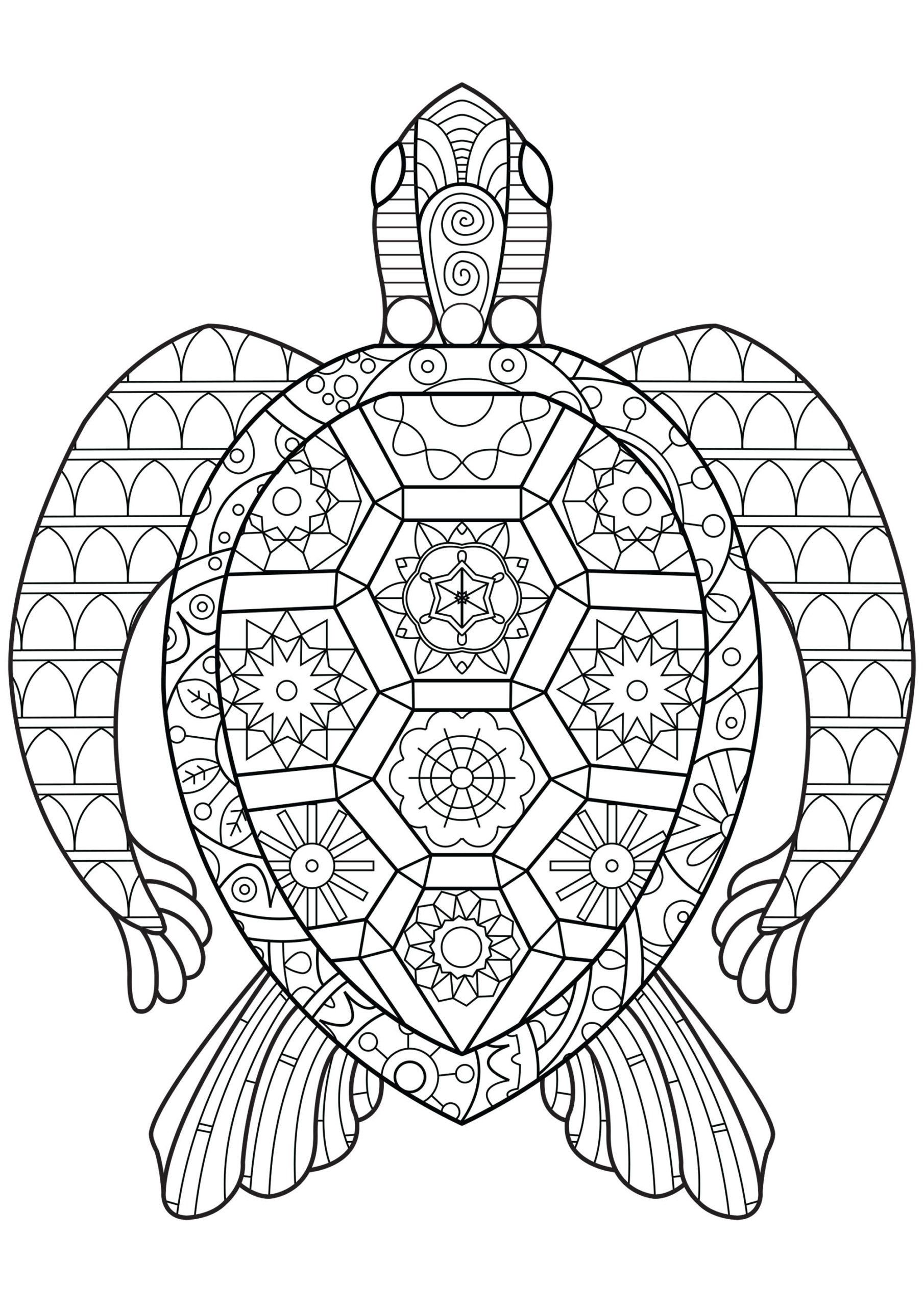 Turtle Coloring Pages For Kids Coloring Turtle Coloring Pages For Adults Image Turtle Coloring Pages Lion Coloring Pages Animal Coloring Pages