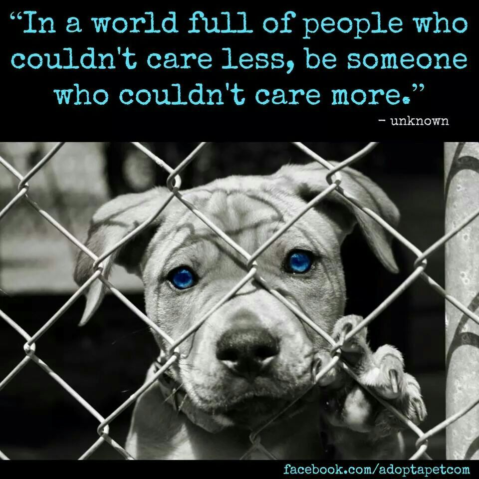 Pin by Carmen Scheepers on Furry Cuties Shelter dogs