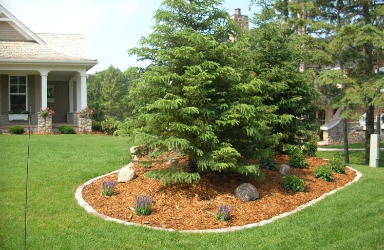 covering up tree roots front yard landscaping design on inspiring trends front yard landscaping ideas minimal budget id=43674